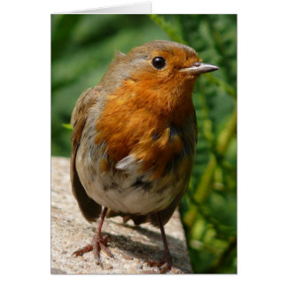Robin eye greeting card