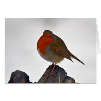 Robin Greeting Card 3