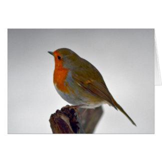 Robin Greeting  Card 4
