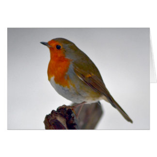 Robin Greeting Card 5
