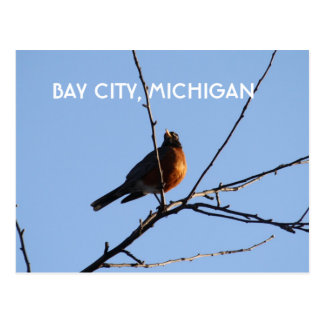 Robin in Bay City, Michigan Postcard