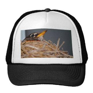 Robin in her nest cap
