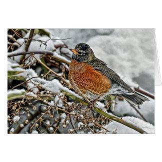 Robin in Snow Card