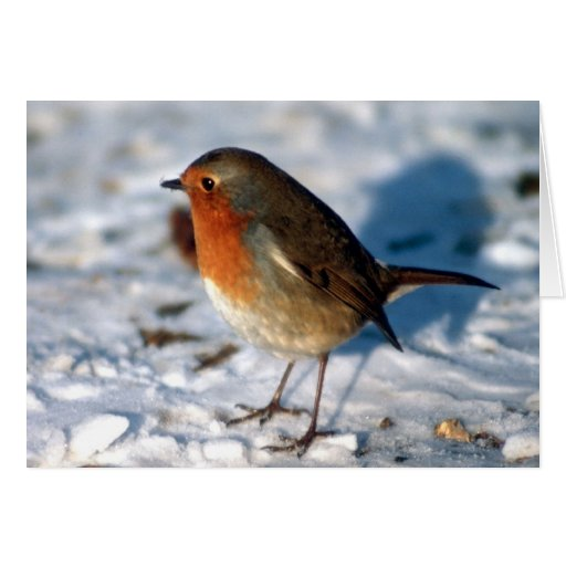 Robin In The Snow Greeting Cards
