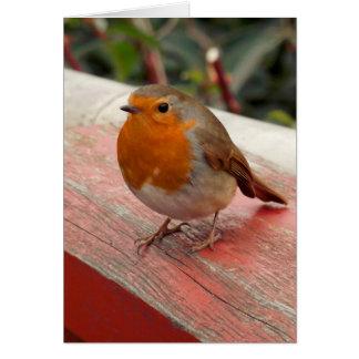 Robin on a Bridge Greeting Card