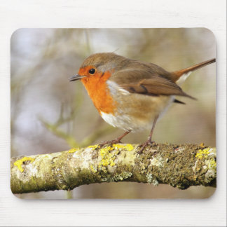 Robin on Branch Mouse Pad