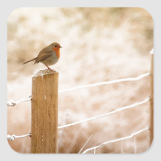 Robin on the Fence Post Square Sticker