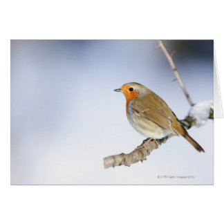 Robin perched on a branch in winter card