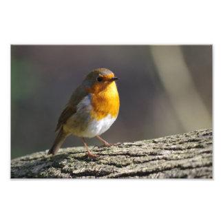 Robin Photo Print