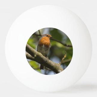 Robin Ping Pong Ball