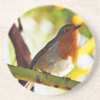 Robin red breast bird beverage coasters