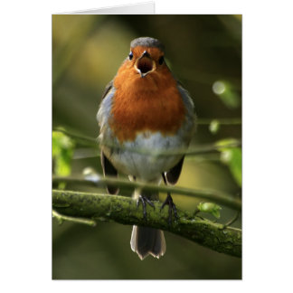 Robin Song Card