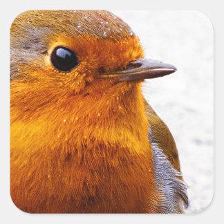 Robin Square Sticker