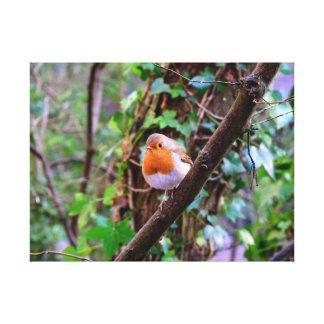 Robin the Robin Canvas Print