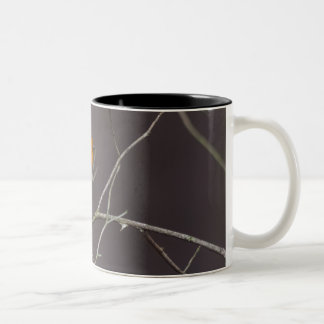 Robin Two-Tone Coffee Mug