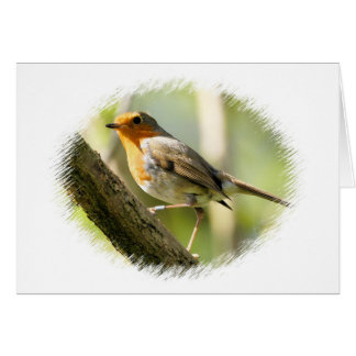 Robin Wild-life Bird Greeting Card