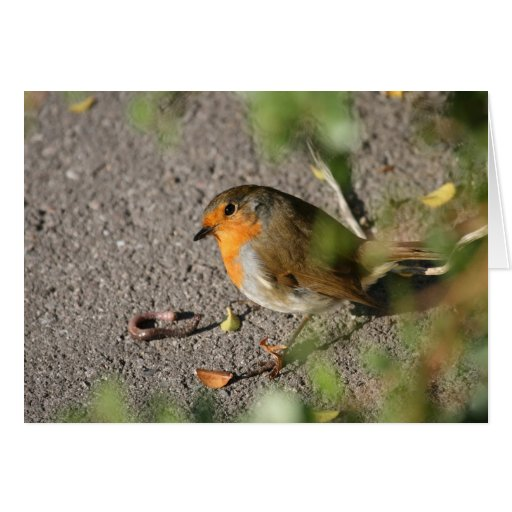 Robin with his worm greeting cards