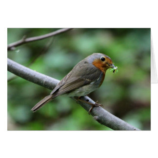Robin with worm greeting card