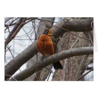 Robin & Wren, Joyful Noise Card
