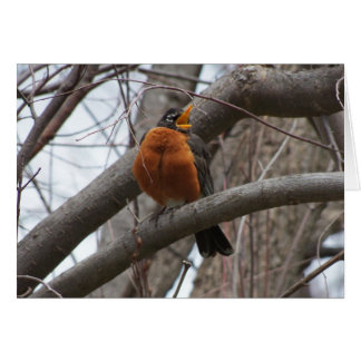 Robin & Wren, Joyful Noise Note Card
