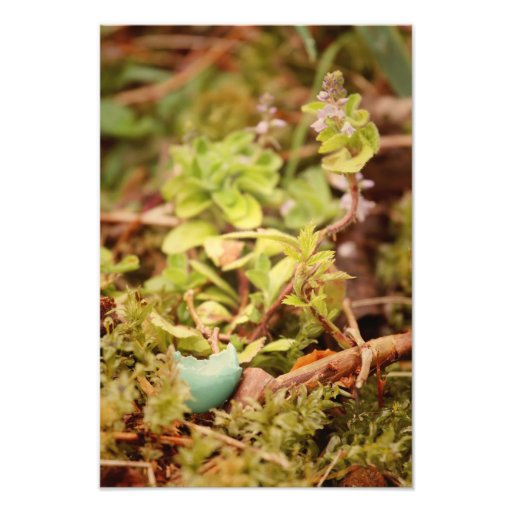 Robin's Egg and Wildflowers Photograph