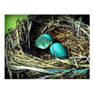 Robin's Egg Nest Spring Post Cards