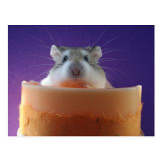 Roborovksi Hamster Postcard