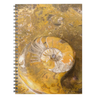 Rock Containing Many Fossils & Ammonite Photo Notebook