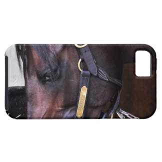 Rock Fall by Speightstown - Renda iPhone 5 Covers