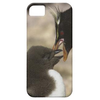Rock-hopper Penguin, Eudyptes chrysocome, iPhone 5 Cover