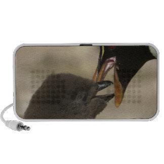 Rock-hopper Penguin, Eudyptes chrysocome, iPod Speaker