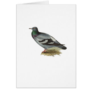 Rock Pigeon Card