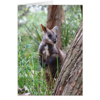 Rock Wallaby Greeting Card
