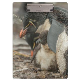 Rockhopper penguin and chick clipboard