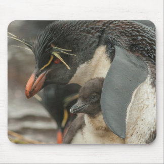 Rockhopper penguin and chick mouse pad