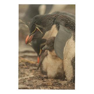Rockhopper penguin and chick wood print