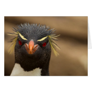 Rockhopper penguin portrait card