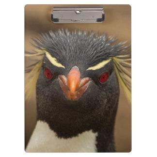 Rockhopper penguin portrait clipboard