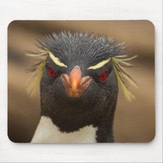 Rockhopper penguin portrait mouse pad
