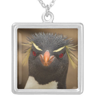 Rockhopper penguin portrait silver plated necklace