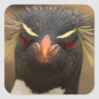 Rockhopper penguin portrait square sticker