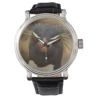 Rockhopper penguin portrait watch