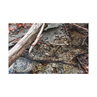 Rocky Creekbed Canvas Print