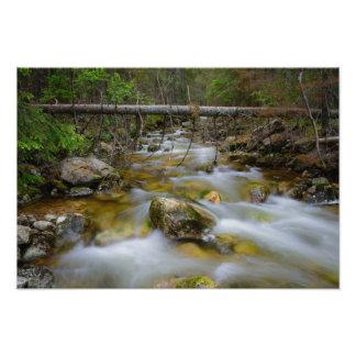 Rocky forest creek photo art