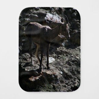 Rocky Mountain Bighorn Sheep, ewe Burp Cloth