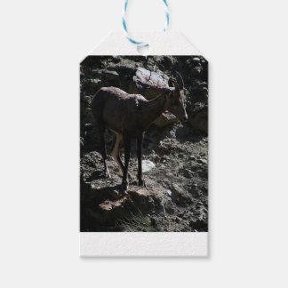 Rocky Mountain Bighorn Sheep, ewe Gift Tags