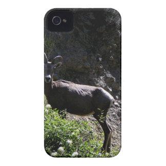 Rocky Mountain Bighorn Sheep, ewe iPhone 4 Case-Mate Case