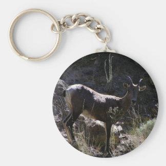 Rocky Mountain Bighorn Sheep, ewe Key Ring