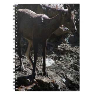 Rocky Mountain Bighorn Sheep, ewe Notebooks