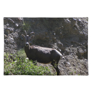Rocky Mountain Bighorn Sheep, ewe Placemat